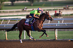 OCT 27 2014:Palace, trained by  Linda Rice, exercises in preparation for the Breeders' Cup Xpressbet Sprint at Santa Anita Race Course in Arcadia, California on October 27, 2014. Kazushi Ishida/ESW/CSM