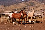 HORSES IN BEAVERHEAD MONTANA