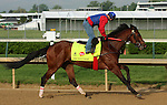 LOUISVILLE, KY - APRIL 25: Discreetness (Discreet Cat x Fondness, by Elusive Quality) gallops on the track at Churchill Downs in preparation for the Kentucky Derby. Owner Xpress Throughbreds LLC, trainer William H. Fires (Photo by Mary M. Meek/Eclipse Sportswire/Getty Images)