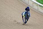 APRIL 30, 2015: El Kidlessabeir, trained by John Terranova II, exercises in preparation for the 141st Kentucky Oaks during morning workouts at Churchill Downs in Louisville, Kentucky. Ting Shen/ESW/Cal Sport Media
