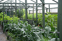 BNPS.co.uk (01202) 558833<br /> Pic: BNPS<br /> <br /> Pictured: Antonio Paladino and Amanda Heron grow a huge variety of herbs and vegetables<br /> <br /> Something fishy or food for thought?<br /> <br /> A chef turned farmer is leading the way in sustainable farming by using fish poo as fertiliser.<br /> <br /> Antonio Palladino farms organically-fed rainbow trout and uses their waste to grow about 50 different fruits and vegetables without the need for soil.<br /> <br /> He says using fish waste as fertiliser is the most sustainable farming method and produces a bigger and much tastier crop.