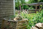 Josiah Dennis Manse house garden.Digitalis and compost