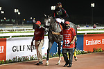 March 27 2021: SLEEPY EYES TODD #12, in the post parade for the Dubai World Cup at Meydan Racecourse, Dubai, UAE. Shamela Hanley/Eclipse Sportswire/CSM