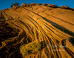 Snakeweed, Sandstone, Grand Staircase-Escalante National Monument, Utah