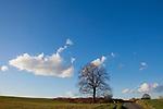 Europa, DEU, Deutschland, Nordrhein Westfalen, NRW, Rheinland, Niederrhein, Sonsbeck, Sonsbecker Schweiz, Himmel, Wolke, Baum, Kategorien und Themen, Natur, Umwelt, Landschaft, Jahreszeiten, Stimmungen, Landschaftsfotografie, Landschaften, Landschaftsphoto, Landschaftsphotographie, Wetter, Himmel, Wolken, Wolkenkunde, Wetterbeobachtung, Wetterelemente, Wetterlage, Wetterkunde, Witterung, Witterungsbedingungen, Wettererscheinungen, Meteorologie, Bauernregeln, Wettervorhersage, Wolkenfotografie, Wetterphaenomene, Wolkenklassifikation, Wolkenbilder, Wolkenfoto....[Fuer die Nutzung gelten die jeweils gueltigen Allgemeinen Liefer-und Geschaeftsbedingungen. Nutzung nur gegen Verwendungsmeldung und Nachweis. Download der AGB unter http://www.image-box.com oder werden auf Anfrage zugesendet. Freigabe ist vorher erforderlich. Jede Nutzung des Fotos ist honorarpflichtig gemaess derzeit gueltiger MFM Liste - Kontakt, Uwe Schmid-Fotografie, Duisburg, Tel. (+49).2065.677997, ..archiv@image-box.com, www.image-box.com]