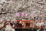 April 4, 2016, Tokyo, Japan - People admire fully bloomed cherry blossoms wheeping over the Meguro River from a bridge in Tokyo on Monday, April 4, 2016. (Photo by Yoshio Tsunoda/AFLO)