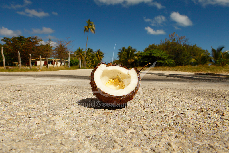 """Broken coconut on the road at  Fayaoue on  the Ouvea island in the Loyalty islands..Ouvéa (local pronunciation: [u?ve.a]) is a commune in the Loyalty Islands Province of New Caledonia, an overseas territory of France in the Pacific Ocean. The settlement of Fayaoué [fa?jawe], on Ouvéa Island, is the administrative centre of the commune of Ouvéa..Ouvéa is made up of Ouvéa Island, the smaller Mouli Island and Faiava Island, and several islets around these three islands. All these lie among the Loyalty Islands, to the northeast of New Caledonia's mainland..Ouvéa Island is one of the Loyalty Islands, in the archipelago of New Caledonia, an overseas territory of France in the Pacific Ocean. The island is part of the commune (municipality) of Ouvéa, in the Islands Province of New Caledonia..The crescent-shaped island, which belongs to a larger atoll, is 50 km (30 miles) long and 7 km (4.5 miles) wide. It lies northeast of Grande Terre, New Caledonia's mainland..Ouvéa is home to around 3,000 people that are organized into tribes divided into Polenesian, Melanesian and Walisian by ethnic descend. The Iaai language is spoken on the island..The two native languages of Ouvéa are the Melanesian Iaai and the Polynesian Faga Uvea, which is the only Polynesian language that has taken root in New Caledonia. Speakers of Faga Uvea have fully integrated into the Kanak society, and consider themselves Kanak..Ouvéa has rich marine resources and is home to many sea turtles, species of fish, coral as well as a native parrot, the Uvea Parakeet, that can only be found on the island of Ouvéa..A large crustacaen called a """"coconut crab"""" or crabe de cocotier can also be found on the islands. The large crabs live in palm tree plantations and live solely on a diet of coconuts that they crack open with their powerful claws. They are blue in colour and can grow to several kilos in size. They are a land based species and do not venture into the ocean..Broken coconut on the road at  Fayaoue on  the Ou"""