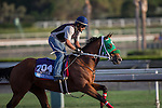 OCT 27 2014:Private Prospect, trained by Michael Campbell, exercises in preparation for the Breeders' Cup Juvenile at Santa Anita Race Course in Arcadia, California on October 27, 2014. Kazushi Ishida/ESW/CSM