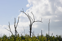 Hurricane Ivan destruction in Mangrove Habitat