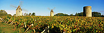 France, Aquitaine, St. Emilion: Vineyard & Windmills in autumn | Frankreich, Aquitanien, St. Emilion: Windmuehlen und Weinberg im Herbst