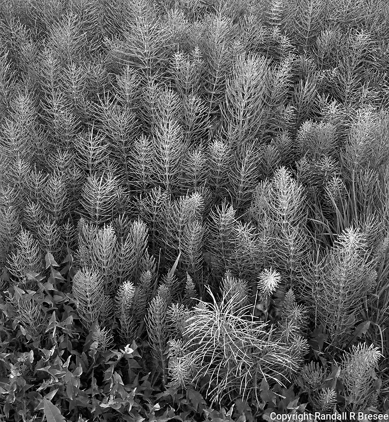 """""""Plant Needles"""" <br /> Nikiski Beach, Alaska<br /> <br /> Many beautiful plants grow in the far north. This black and white photo shows a cluster of plants growing at the forest edge on Nikiski Beach on the Kenai Peninsula just south of Anchorage, Alaska."""