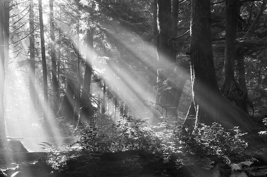 """Good Day Sunshine""<br />
