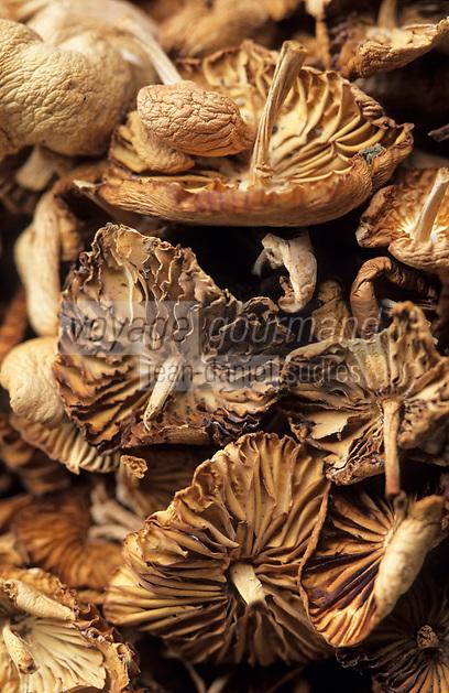 """Europe/France/Languedoc-Roussillon/66/Pyrénées-Orientales/Env de Prats-de-Mollo-la-Preste: """"Courioulettes"""" champignons de prairie type bouton de guetre à la ferme auberge """"La Costa de Dalt"""""""