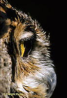 OW06-042z   Great Horned Owl - side view of eye showing clear view of cornea - Bubo virginianus