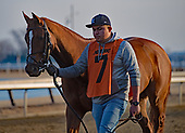 Withers Stakes - Tax