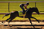 LOUISVILLE, KY - APRIL 20: Mo Tom (Uncle Mo x Caroni, by Rubiano) works 4 furlongs in :47 in the early morning at Churchill Downs, Louisville KY. Owner G M B Racing, trainer Thomas A. Amoss. (Photo by Mary M. Meek/Eclipse Sportswire/Getty Images)