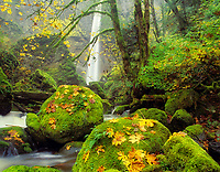 Elowah Falls and maple leaves in fall color. Columbia River Gorge National Scenic Area, Oregon.
