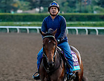 October 27, 2019 : Breeders' Cup Juvenile Turf entrant War Beast, trained by Doug F. O'Neill, exercises in preparation for the Breeders' Cup World Championships at Santa Anita Park in Arcadia, California on October 27, 2019. John Voorhees/Eclipse Sportswire/Breeders' Cup/CSM