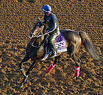 October 27, 2014:  Handsome Mike, trained by Leandro Mora, exercises in preparation for the Breeders' Cup Dirt Mile or Sprint at Santa Anita Race Course in Arcadia, California on October 27, 2014. John Voorhees/ESW/CSM