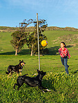 Maddy playing a game of tether ball with the dogs.