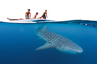 Kids in awe of a whale shark, Rhincodon typus, passing below in the Bohol Sea, Philippines, Indo-Pacific Ocean