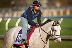 October 29, 2015:  Conquest Big E, trained by Mark E. Casse and owned by Conquest Stables, LLC (Ernie Semersky & Dory Newel), exercises in preparation for the Sentient Jet Breeders' Cup Juvenile at Keeneland Race Track in Lexington, Kentucky. Alex Evers/ESW/CSM