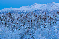 Hoarfrost on trees and shrubs with Chugach Mountains in background at Anchorage, Alaska Winter Southcentral, Alaska