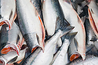 Copper river King and Sockeye salmon caught in the Copper River Delta gill net fishery.