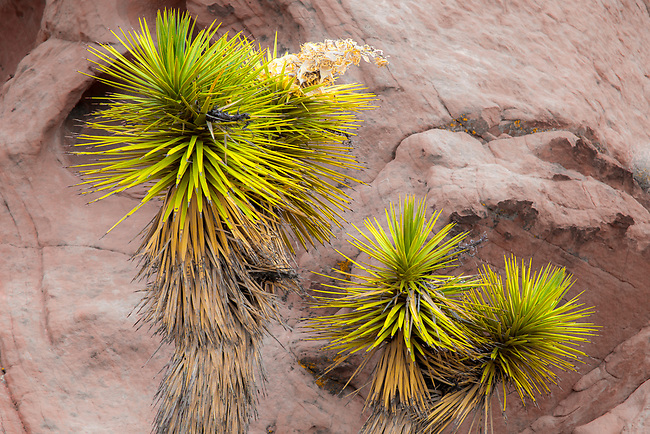 Sandstone rock formations and desert flora make up Gold Butte National Monument in Nevada.