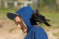 Dohle, zutrauliches Tier auf der Schulter eines Kindes, Corvus monedula, Jackdaw, Choucas des tours