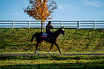 October 31, 2020: Royal Approval, trained by trainer Wesley A. Ward, heads back from the track after exercising in preparation for the Breeders' Cup Juvenile Fillies Turf at Keeneland Racetrack in Lexington, Kentucky on October 31, 2020.Scott Serio/Eclipse Sportswire/Breeders Cup/CSM