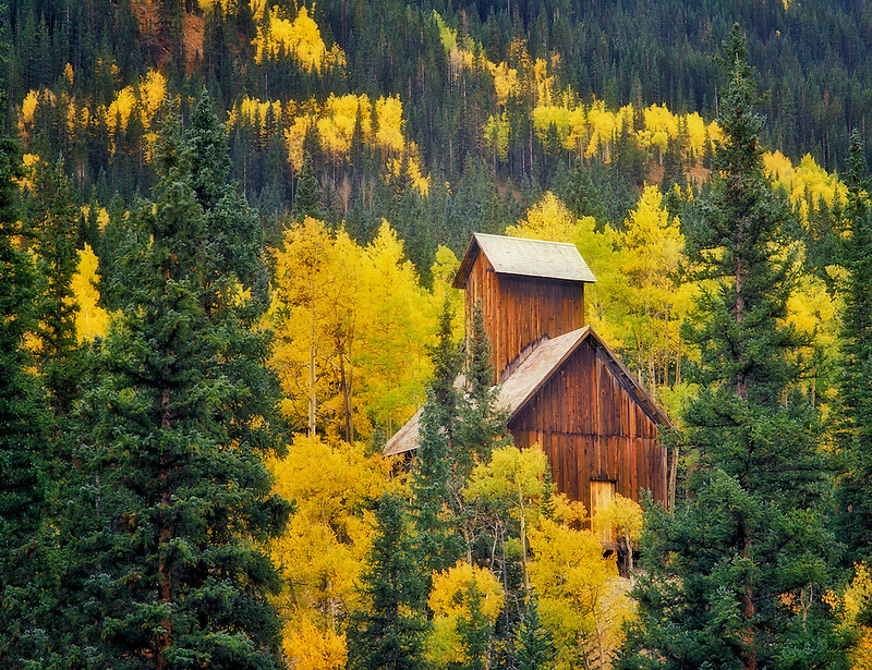 Mining structure with fall colored aspens. Uncompahgre National Forest, Colorado