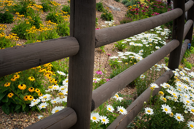 Fence and garden flowers. Vail Village, Colorado