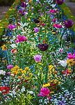 Deutschland, Bayern, Unterfranken, Wuerzburg: im Garten der Wuerzburger  Residenz - Blumenbeet | Germany, Bavaria, Lower Franconia, Wuerzburg: garden of Wuerzburg Residence - flowerbed