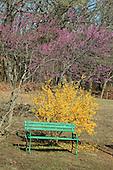 Green Bench, Red Tree, Yellow Bush