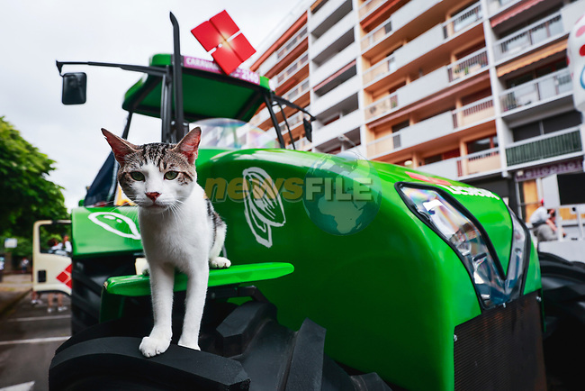 Curious cat on the publicity caravan before Stage 18 of the 2021 Tour de France, running 129.7km from Pau to Luz Ardiden, France. 15th July 2021.  <br /> Picture: A.S.O./Aurelien Vialatte | Cyclefile<br /> <br /> All photos usage must carry mandatory copyright credit (© Cyclefile | A.S.O./Aurelien Vialatte)