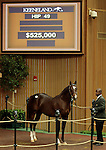 LEXINGTON, KY - September 12: Hip # 49 Giant's Causeway - Spunoutacontrol Colt consigned by Lane's End sold for $525,000 at the September Yearling sale at Keeneland.  September 12, 2016 in Lexington, KY (Photo by Candice Chavez/Eclipse Sportswire/Getty Images)