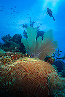 Diving the atolls, cayes and coral reefs and the barrier reef of Belize