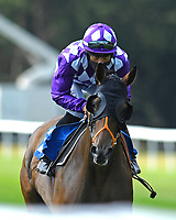 Separate ridden by Sean Levey goes down to the start of The AJN Steelstock Steel Processors British EBF Fillies' Handicap during Horse Racing at Salisbury Racecourse on 9th August 2020