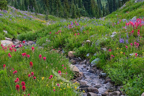 Wildflowers--lupine, arnica, paintbrush, cinquefoil, etc.--in subalpine meadow along small stream, Mount Rainier National Park, WA.  Summer.