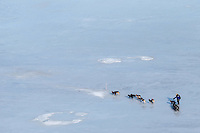 Martin Buser travels along the glare ice between Golovin and White Mountain on Monday, March 10, during the Iditarod Sled Dog Race 2014.<br /> <br /> PHOTO (c) BY JEFF SCHULTZ/IditarodPhotos.com -- REPRODUCTION PROHIBITED WITHOUT PERMISSION