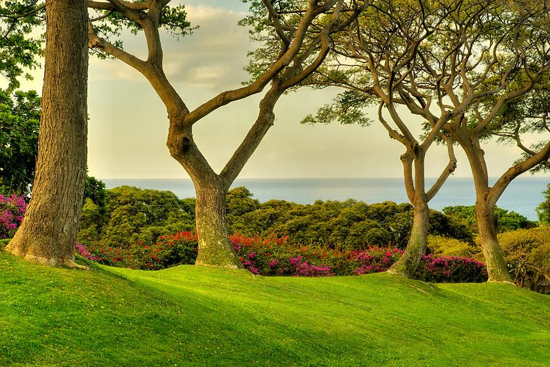 Trees and ocean view at Four Seasons. Lanai, Hawaii.