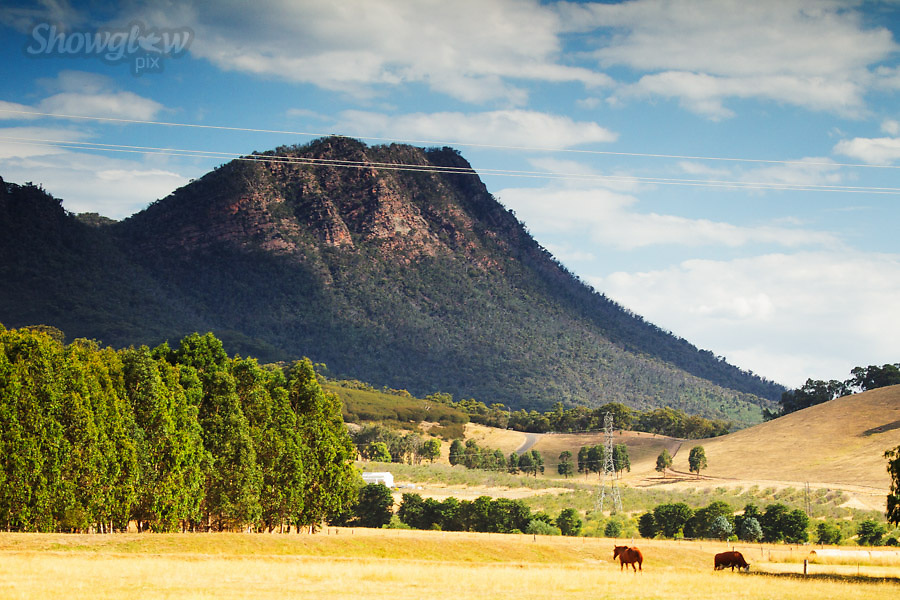 Image Ref: H015<br /> Location: Cathedral State Park, Victoria<br /> Date: 28 Dec 2014