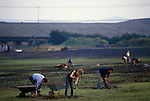 Miners strike 1984 Shirebrook Colliery Derbyshire. Striking miners scavenge for free coal in waste ground of the spoilt tip. 1980s. <br /> Free coal was a perk that all mine workers enjoyed. The coal was used for domestic heating etc. Working miners who were known as Scabs, still received their free coal supply.