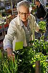 Older female person choosing herbs