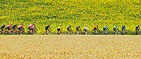 14th July 2021, Muret, France;  Peloton during stage 17 of the 108th edition of the 2021 Tour de France cycling race, a stage of 178,4 kms between Muret and Saint-Lary-Soulan.