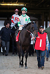 LOUISVILLE, KY - NOV 12: Zapperini (#1, jockey Corey Lanerie) in the post parade of the Commonwealth Turf Cup, Churchill Downs, Louisville, Kentucky. He is followed by Sir Dudley Diggs and jockey Julien Leparoux. (Photo by Mary M. Meek/Eclipse Sportswire/Getty Images)