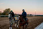 October 31, 2020: Tacitus heads to the track in preparation for the Breeders' Cup Classic Keeneland Racetrack in Lexington, Kentucky on October 31, 2020. Scott Serio/Eclipse Sportswire/Breeders Cup/CSM