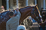 LOUISVILLE, KY - MAY 01: Justify, trained by Bob Baffert, gets a bath after exercising in preparation for the Kentucky Derby at Churchill Downs on May 1, 2018 in Louisville, Kentucky. (Photo by John Voorhees/Eclipse Sportswire/Getty Images)