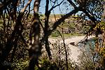 Image Ref: CA965<br /> Location: Bushrangers Bay Track<br /> Date of Shot: 28.09.19